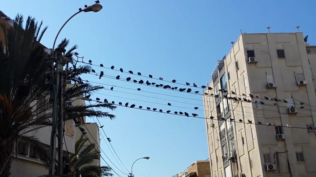 PIGEONS ON ELECTRICITY WIRES - YouTube