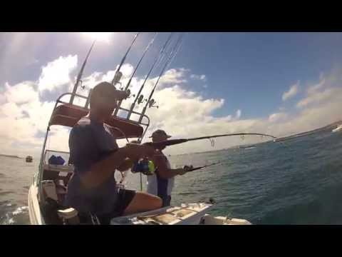 Victorian Kingfish - Port Phillip Bay (The Rip) 2