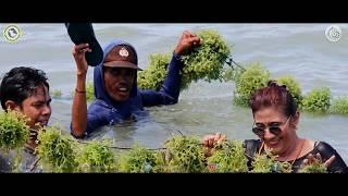 Profil Rumput Laut Indonesia