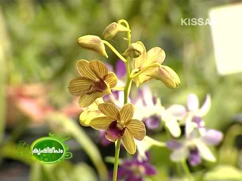 Potential scope of commercial Orchid cultivation