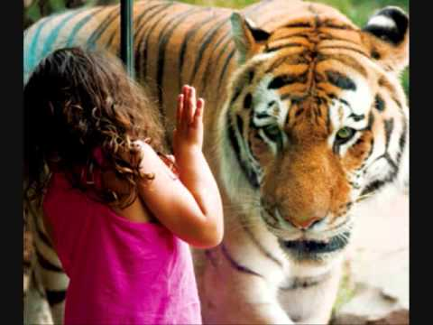 importance of zoos Zoos are able to educate the public and inform about important biodiversity  issues they provide protection for endangered species that are no.