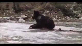 Медведь / The Bear / L' Ours (1988)