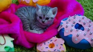 ТАЙНАЯ ЖИЗНЬ ДОМАШНИХ ЖИВОТНЫХ | Three kitten and mother play | КЛУБ КАТИ