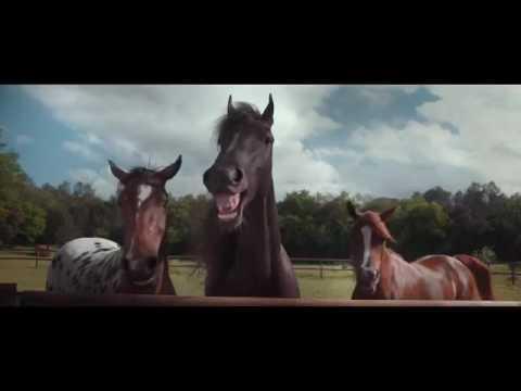 Ржач!! Лошади смеютя над водителем, который не может припорковать авто!!Funny Video
