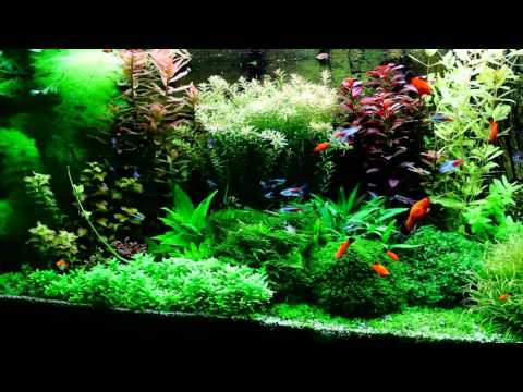 My dutch style aquarium with TF Planter fertiliser