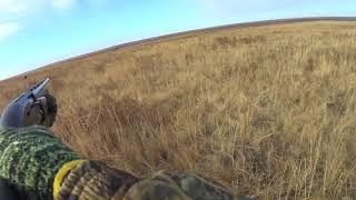 Охота на зайца с Дратхааром и Курцхааром 2017 - 2018