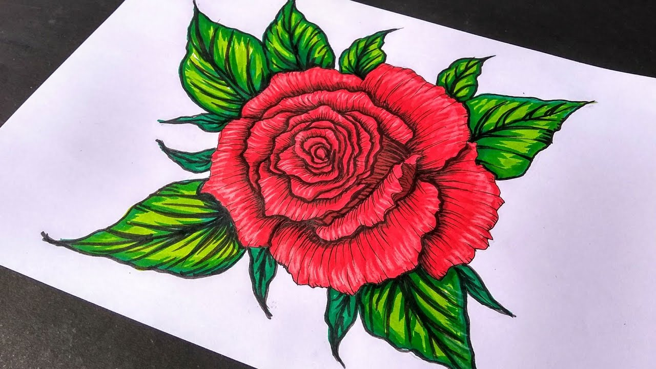 It is a graphic of Massif Rose Drawing Color