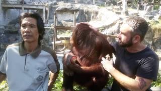 Таиланд, Паттайя, зоопарк Као Кео, обьезьяна ручная, сколько стоит фото с обезьяной