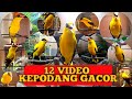 Kicau Burung Kepodang Gacor  Gogor  Mp3 - Mp4 Download