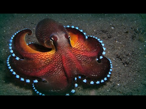 WHY THE OCTOPUSES IS THE WEIRDEST ANIMALS ON EARTH