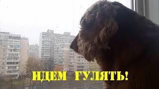 Спаниель Сёма. Говорящая собака. Снег выпал собаку аж трясет!