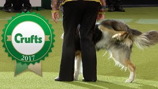 Oh Dear! Crufts 2017 Fails and Bloopers!
