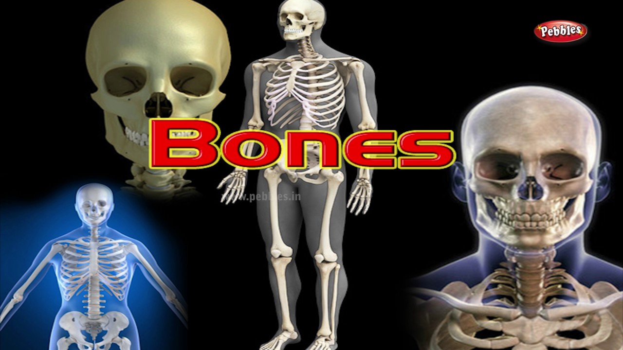 Human Body Facts Part 1 How Human Body Works For Kids Body Parts