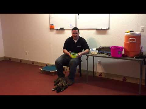 How to train a diabetic alert dog! Scent imprinting.