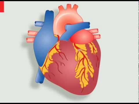 Electric beats pacemakers and the human heart youtube ccuart Images
