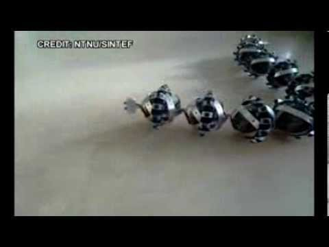 Snake Robot on MARS (European Space Agency to Send a Snake ...