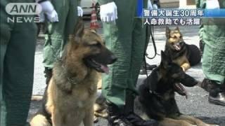 被災地での人命救助などで活躍する警備犬の誕生から30周年を迎え、記念...