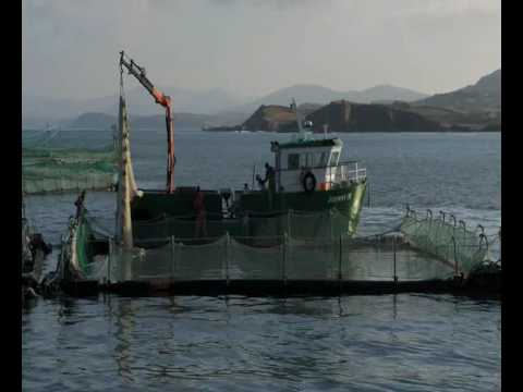 Murphy's Irish Organic Salmon Farming, Tropical Aquaculture Products, Inc.