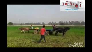 झोटा बुग्गी vs बुलद बुग्गी tochan competition