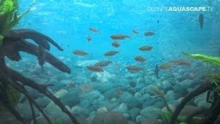 Aquarium Ideas from InterZoo 2012 (pt. 20) - Amtra