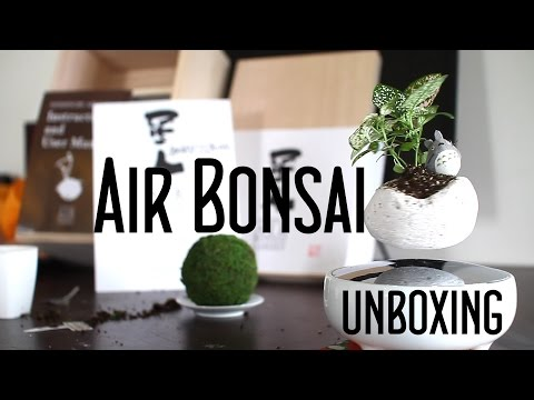 Air Bonsai Unboxing - Floating Bonsai Set - 星人空中盆栽園開封動画