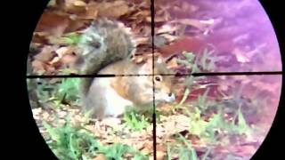 Hunting and pesting with air rifle