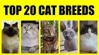 Top 20 CAT Breeds || Most Popular Cat Breeds in the World || Best Cats || Domestic Cats