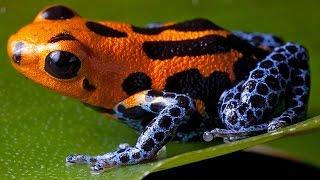 ТОП 5 смертельно опасных животных Амазонки