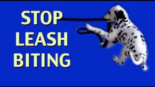 How To Stop Leash Biting- Clicker Dog Training