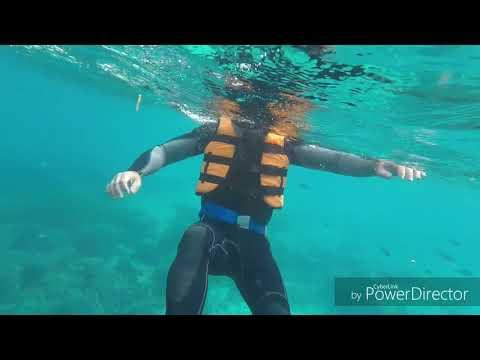 Underwater Pamilacan, Bohol, Philippines.