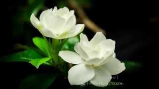 Красивое видео о цветах(, 2013-09-19T21:59:35.000Z)