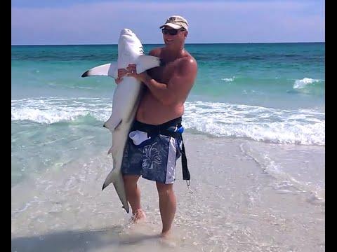 Henderson Beach State Park in Destin FL - Bull or Blacktip Shark caught on fishing reel