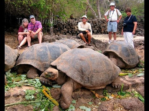 Giant Tortoise : Best Documentary Of All Time