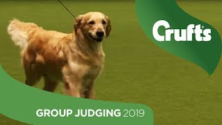 Gundog Group Judging and Presentation | Crufts 2019