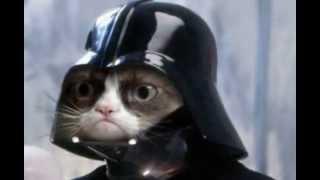 Звезда интернета, угрюмый кот Соус Тартар