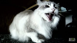 Whether You Laugh or Cry, Symone Is Not Amused | My Cat From Hell