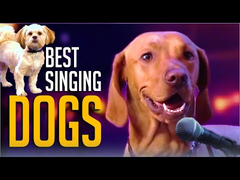 6 Best Singing Dogs EVER On Got Talent! But Which Dog WINS?