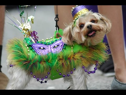 Psychostick Mardi Gras Webcast!
