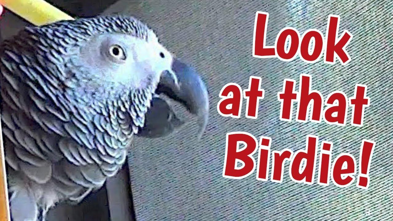 Look at that birdie! 👀