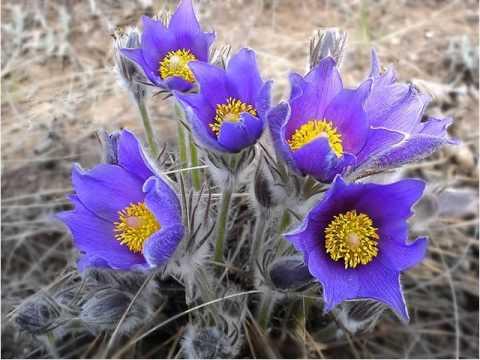Kwiaty Wiosenne Youtube