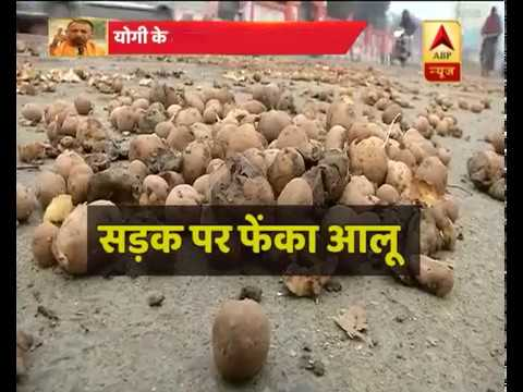 Potatoes thrown outside UP CM residence: 2 close aides of Akhilesh Yadav arrested