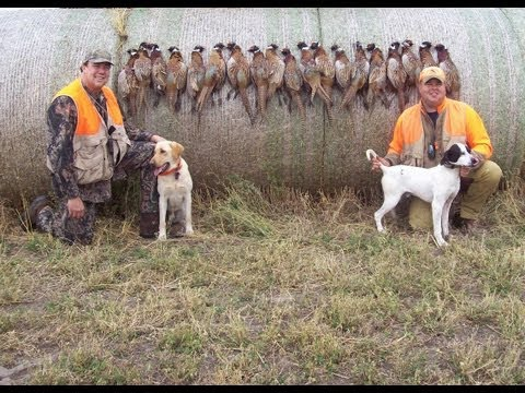 South Dakota Pheasant Hunting With Whiteoak Outfitters
