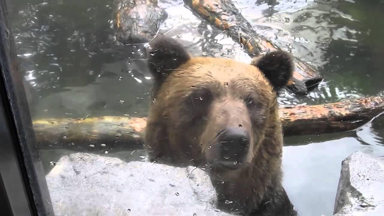 Punch of bear 熊パンチ - YouTube