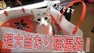 【福袋】猫用の福袋開封したら超大当たり袋だった!!!!