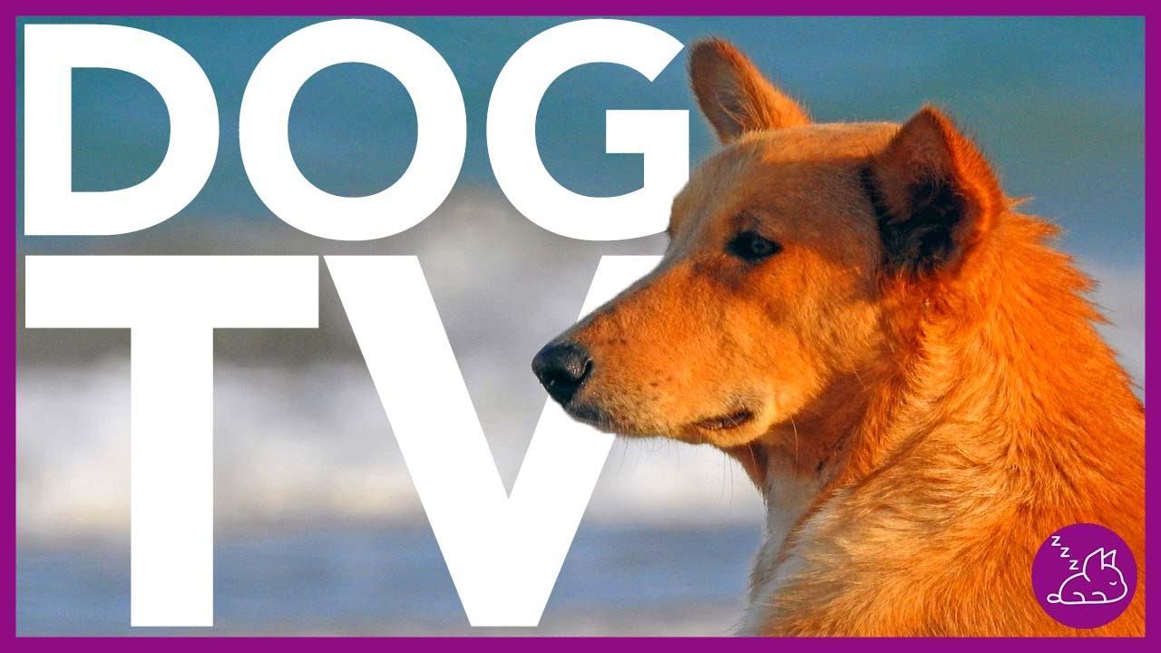15 HOUR DOG TV - ENTERTAIN YOUR DOG WITH VIRTUAL DOG WALKS - (2021)