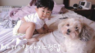 아기와 강아지 첫인사: )/개월수에 맞는 엄마표 장난감…