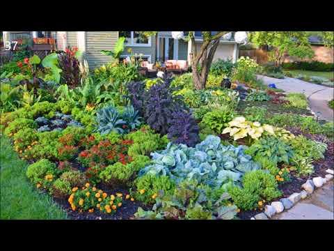 Vegetable garden Potager design Ideas
