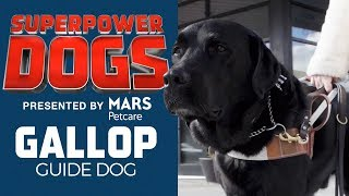 Molly Burke's Guide Dog: Gallop | Superpower Dogs