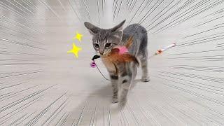 아기고양이의 장난감 물어오기 (feat.총총총)