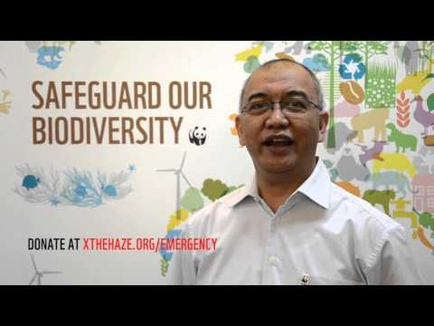 WWF Indonesia Emergency Appeal - Message from Anwar Purwoto